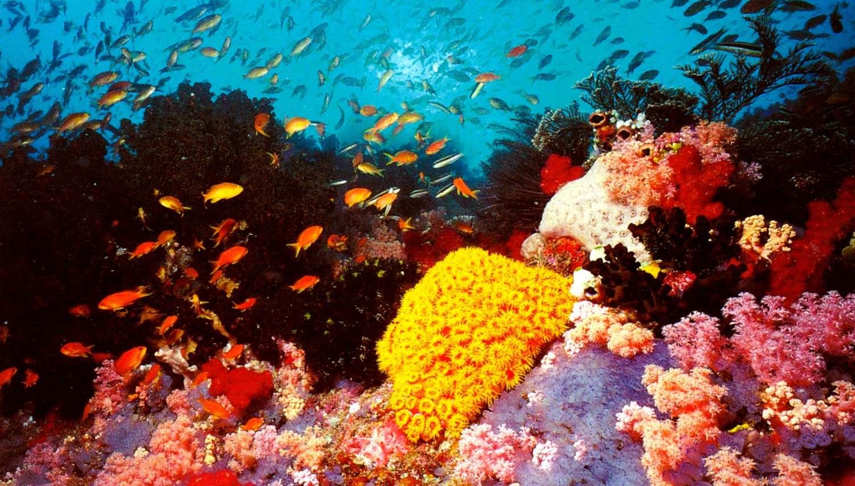 Arrecife coralino exhuberante en Banana Reef Maldivas